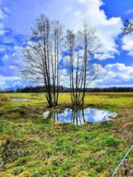 Baum Sumpf